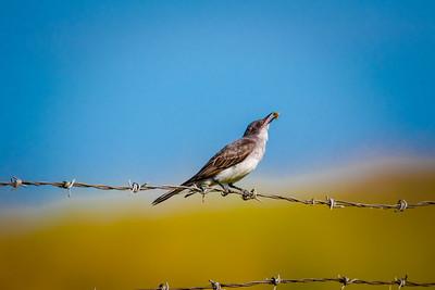 Bird (13)
