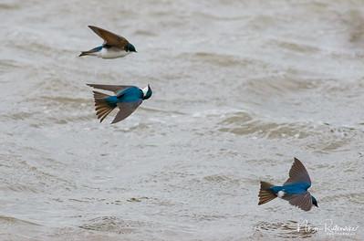 Bird (7)