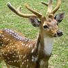 game park deer