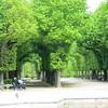 Well manicured trees at Schönbrunn gardens