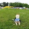 Stressmannetje chilling in the Schönbrunn gardens
