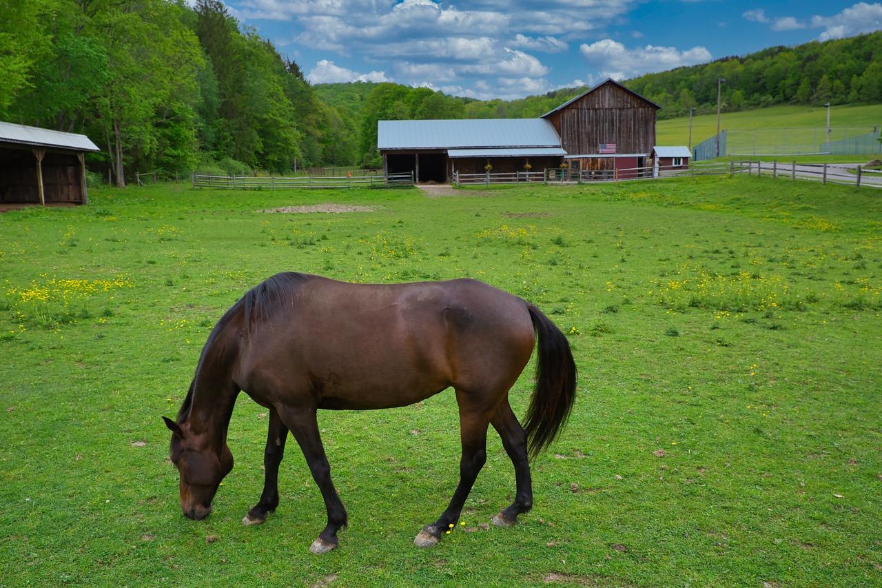 IMAGE: https://photos.smugmug.com/East-to-Ellicottville-2020/i-ddtr9nS/0/9ff49ae7/X2/Horse%20and%20Barn-X2.jpg