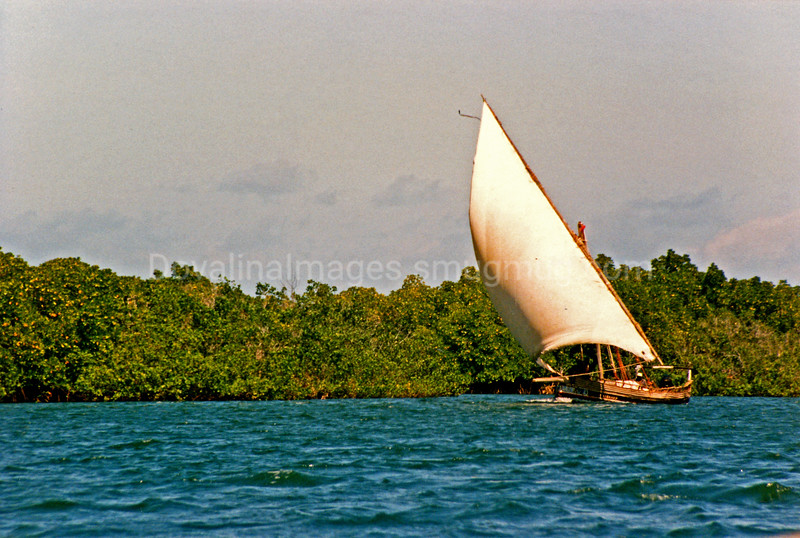 Dhow Under Sail