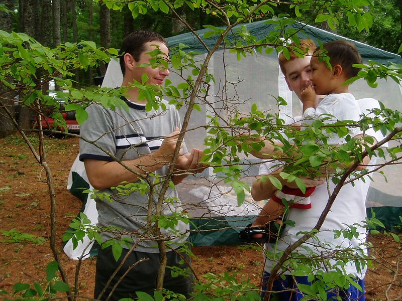 Blueberry 2003.<BR> Blueberry tasting