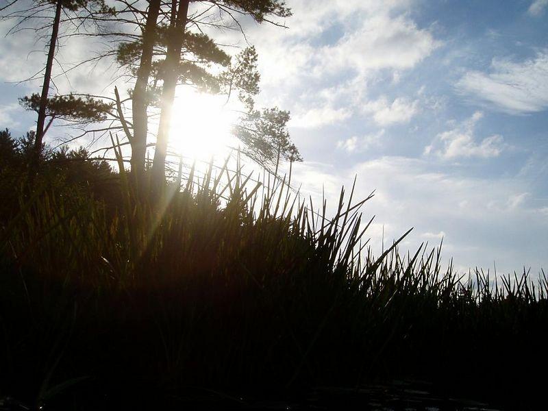 Cove's sun