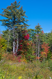 New Hampshire-0282