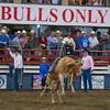Bulls Only 2010_0456