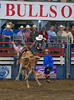 Bulls Only 2010_0454