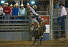 Bulls Only 2010_0514