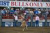 Bulls Only 2010_0455