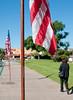 El Cajon Flags Veterans Day_4941