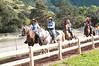 Horse Trail_4094