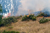 Lakeside vegetation fire 06-01-2010_0325