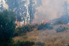 Lakeside vegetation fire 06-01-2010_0317