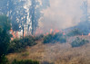 Lakeside vegetation fire 06-01-2010_0317_1