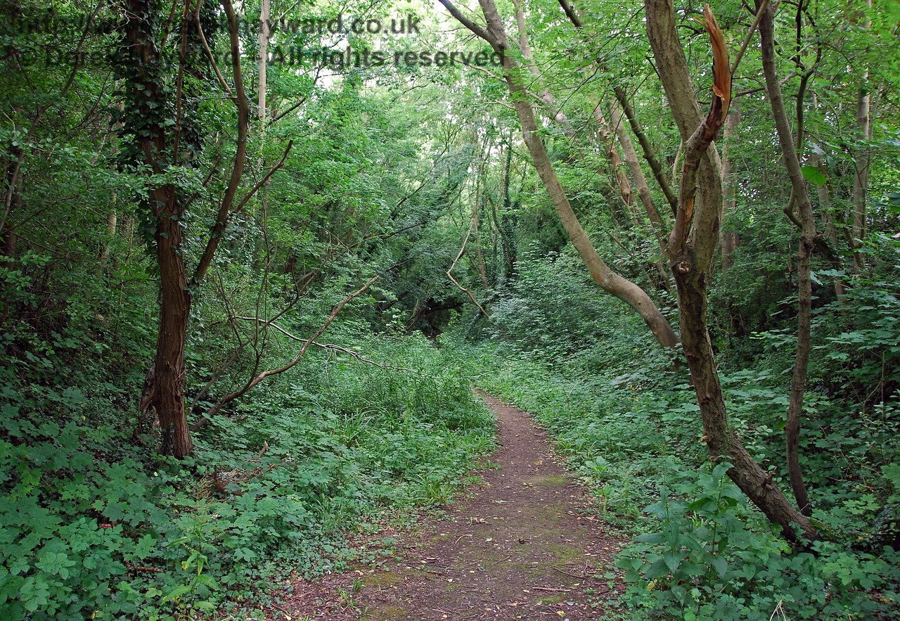 Entering the cutting that carried the double track to London in a curve to the north.  A path follows the route, but the summer undergrowth conceals all trace of the former railway. 26.07.2009