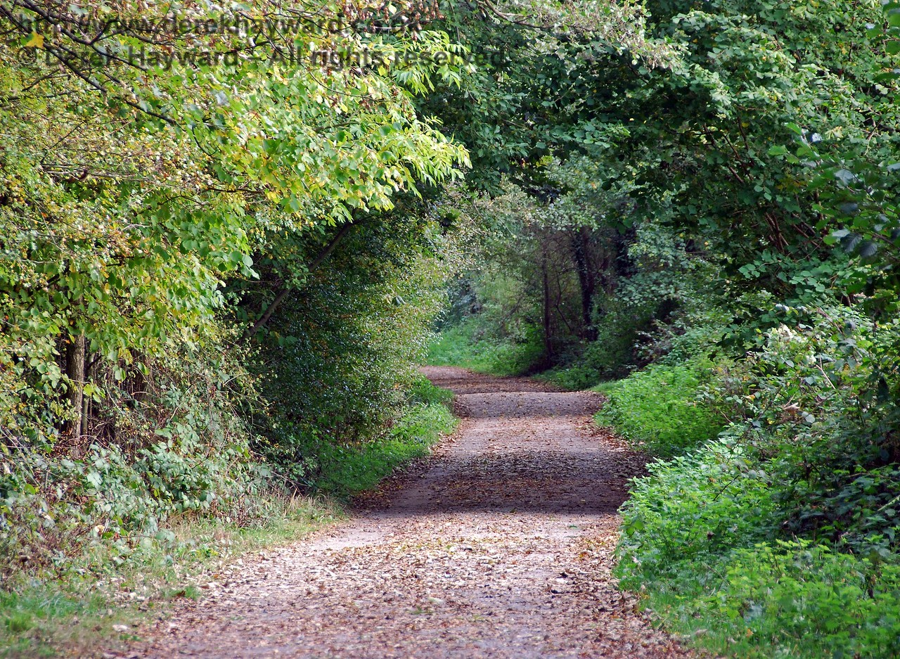 The eastern borders of the old Forest Row Station now just look like a country path.  This view looks east back towards Hartfield Station, which is a considerable distance away. 18.10.2009