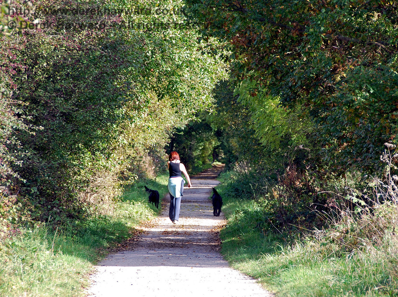 Looking east from the same point as the previous picture, but with a longer lens. The old track is now a popular leisure area frequently used for cycling or exercising dogs. 18.10.2009