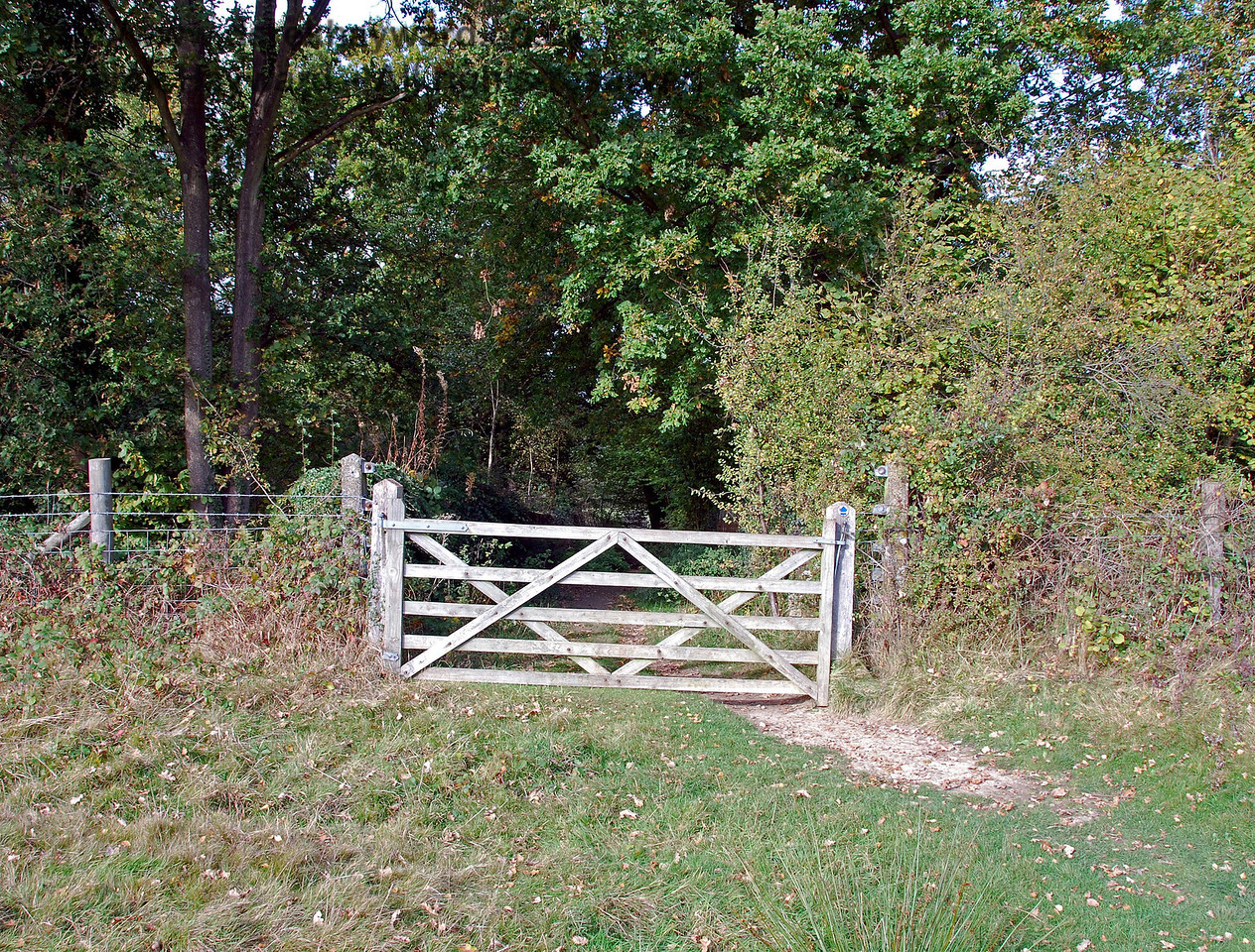 Still up on the land adjacent to the bridge, this shot looks north. The entrance to the bridge is gated to control livestock, and the bridleway leads away towards Chartners Farm. 18.10.2009