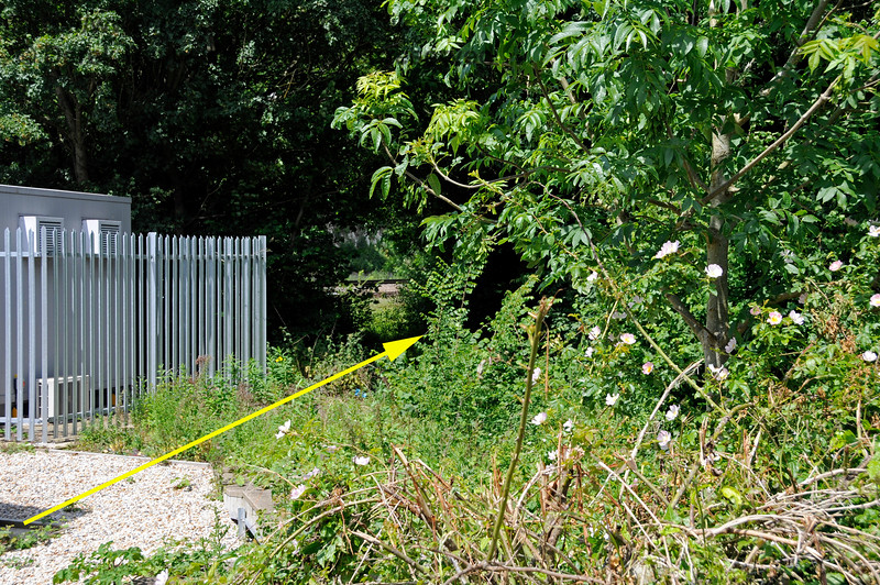 Although obscured, under the vegetation is the line that links to the adjacent Network Rail sidings which are north east of the Network Rail station.  (Route marked by yellow arrow).  This link is intact except for one short length of rail removed to isolate the line.  The EKR are hoping to reinstate the link and acquire the adjacent sidings.  Negotiations were taking place at the time this picture was taken. Shepherdswell Station, East Kent Railway,  17.06.2015  12752