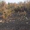 Charred remnants of a fire