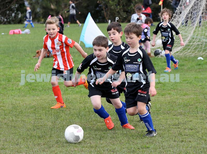 ESFA Soccer Gala Day at Christison Park in Vaucluse. Maccabi Lions vs Bondi Stingers U7. Pic Noel Kessel.