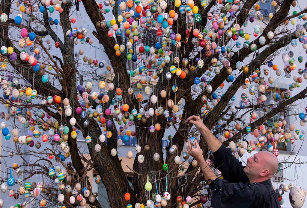 . Uwe Gerstenberg fixes Easter eggs on a robinia tree with more than 10,000 painted Easter eggs in Saalfeld, central Germany, Friday, March 30, 2018. AP Photo/Jens Meyer)