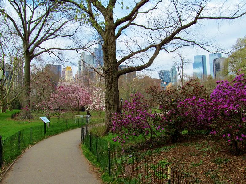 Central Park, Easter Morning 2016
