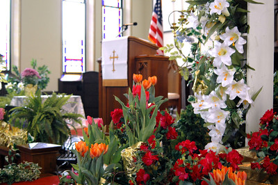 Altar Tulips - 2