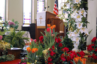 Altar Tulips - 1