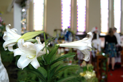 Easter Lily - 2