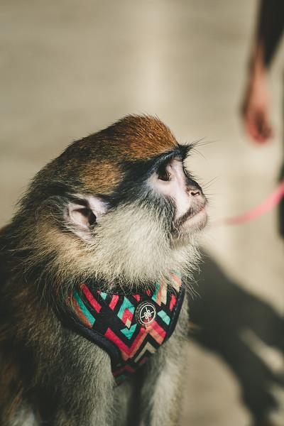 Angel the Monkey