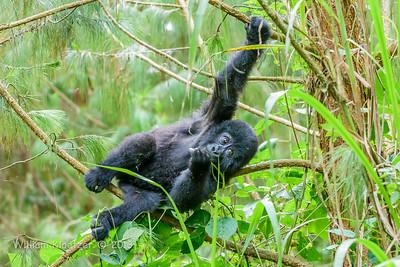 Bwindi Impenetrable Forest (Uganda)