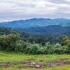 Gorilla trekking in Bwindi Inpenetrable National Park, Uganda