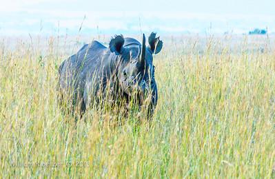 Maasai Mara National Reserve (Kenya)