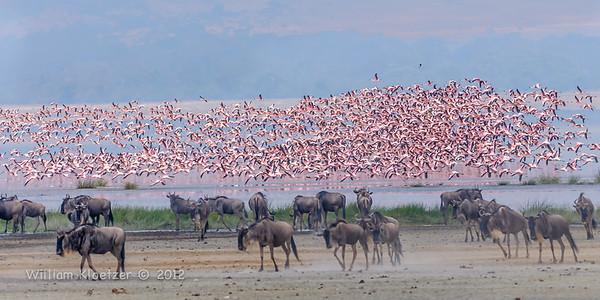 Ngorongoro Conservation Area (Tanzania)