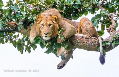 Queen Elizabeth National Park (Uganda)