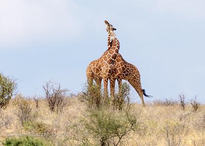 Samburu National Reserve (Kenya)