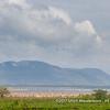 Lake Manyara with flocks of Great White Pelicans, Lake Manyara National Park, Tanzania