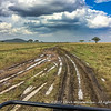 Muddy tracks, Serengeti National Park, Tanzania
