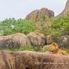 King of the kopjes, Serengeti National Park, Tanzania