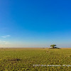 The plains of the Serengeti National Park, Tanzania