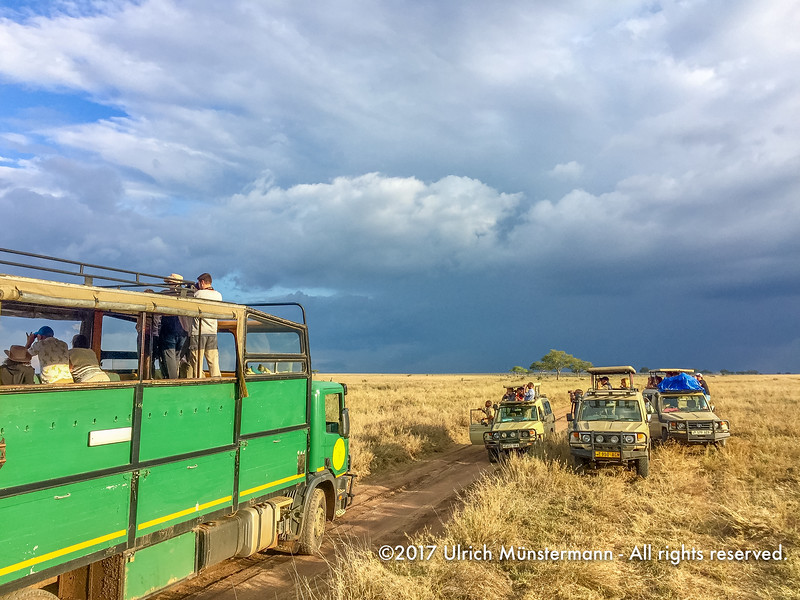 Tourists watching a leopard from their vehicles, Serengeti National Park, Tanzania
