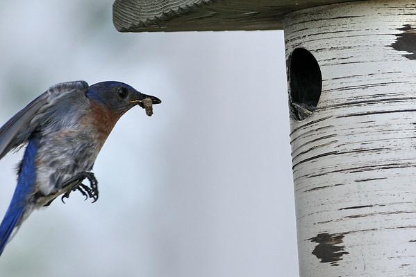 Gilbertson nest box shots