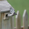 """July 6, 2006<br /> A fledgling takes its """"leap of faith."""""""