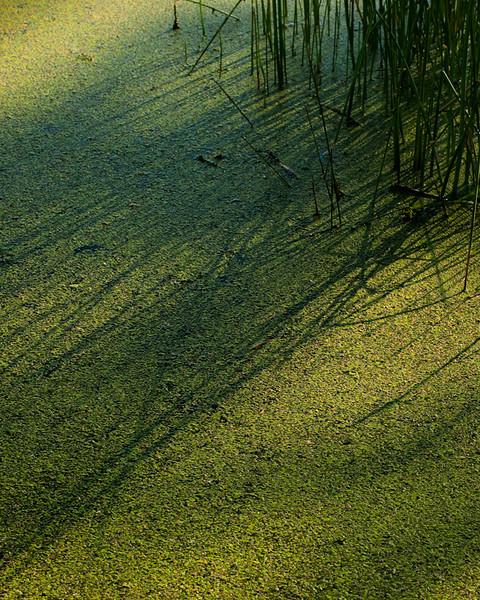 Grasses on Mud Lake