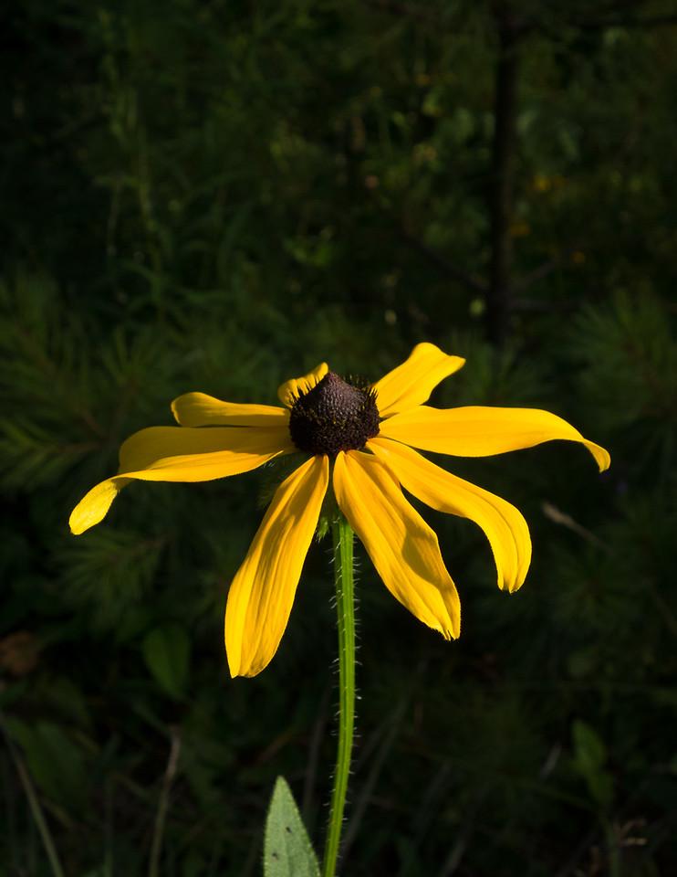 IMAGE: https://photos.smugmug.com/Eastern-Ontario-2007-/Misc-closeups/i-bfkS2Xh/0/e7e2e397/X2/DSC01048-X2.jpg