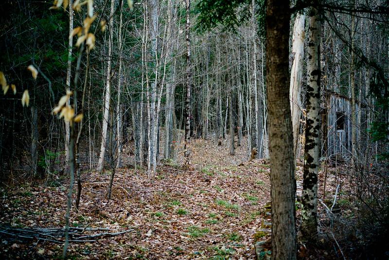 IMAGE: https://photos.smugmug.com/Eastern-Ontario-2007-/Scenery-near-my-home/i-Hr9v67Q/0/f2faeee6/L/DSC00131-L.jpg