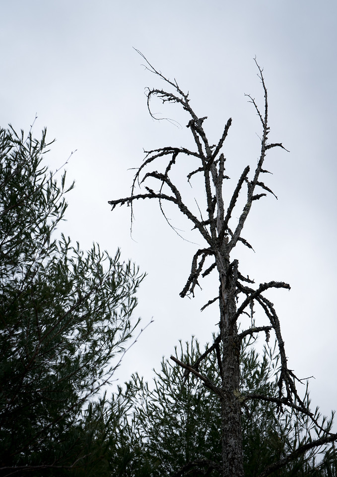 IMAGE: https://photos.smugmug.com/Eastern-Ontario-2007-/Scenery-near-my-home/i-mmgVDbt/0/1313073f/X2/DSC00008-X2.jpg