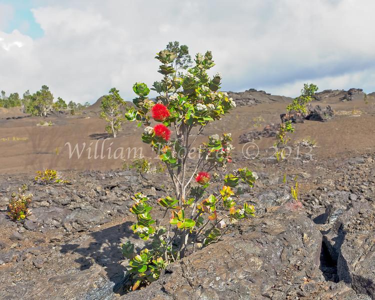 Volcano National Park; BIg Island, Hawaii (01-09-12)